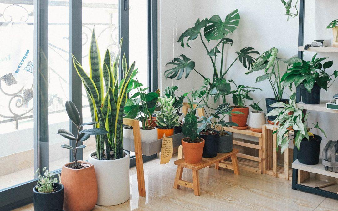 augalai padeda sumažinti stresą