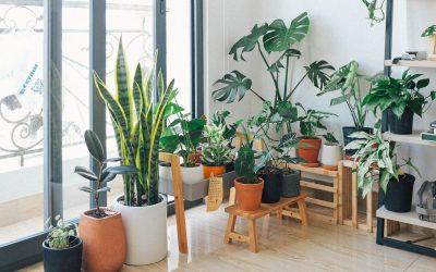Kaip augalai padeda sumažinti stresą